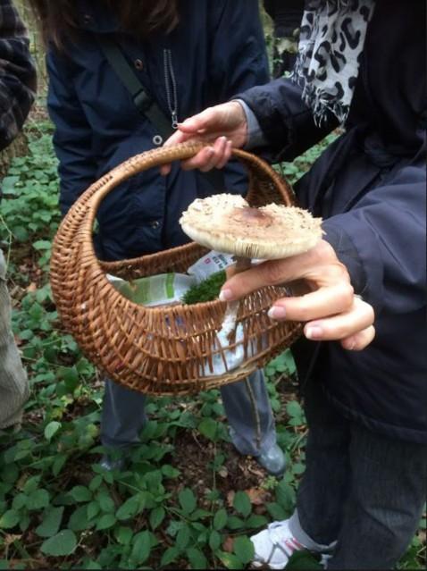 Découverte des champignons en forêt de Saint Germain